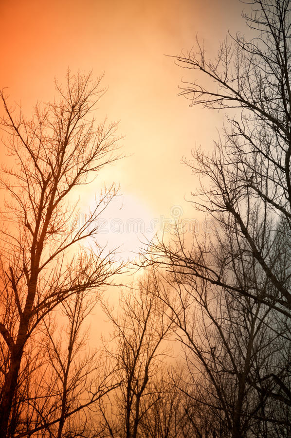 Free Leafless Trees Against The Winter Dusk Background Royalty Free Stock Photo - 16933645