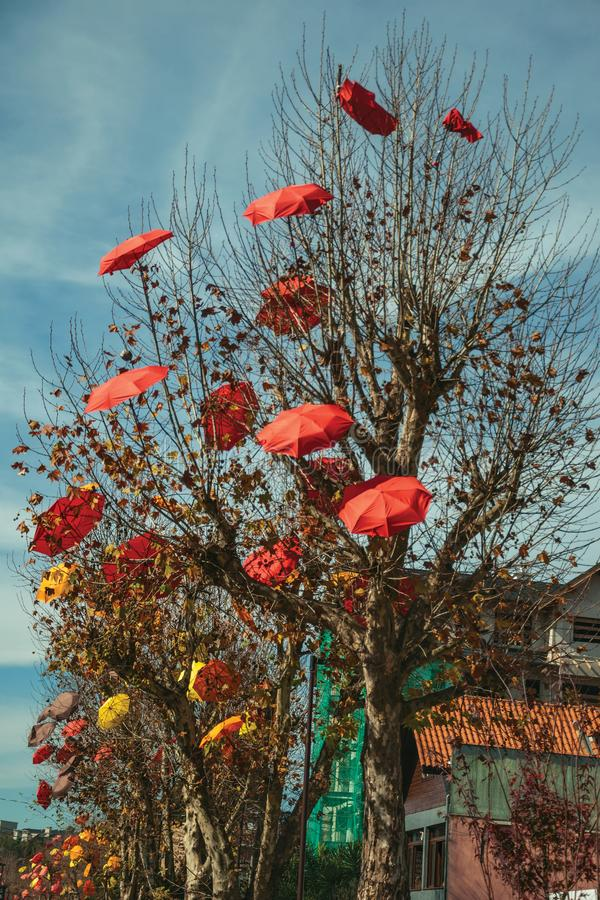 Leafless trees with decorative umbrellas royalty free stock photos