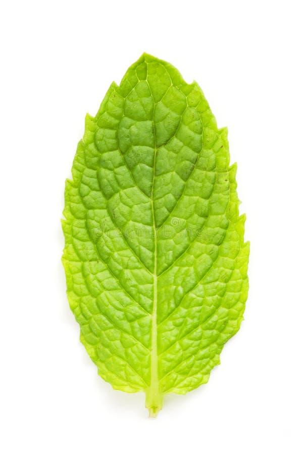 leafmakromint royaltyfri fotografi