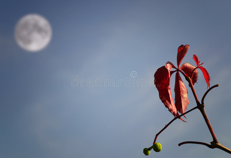 leafmoon royaltyfri fotografi
