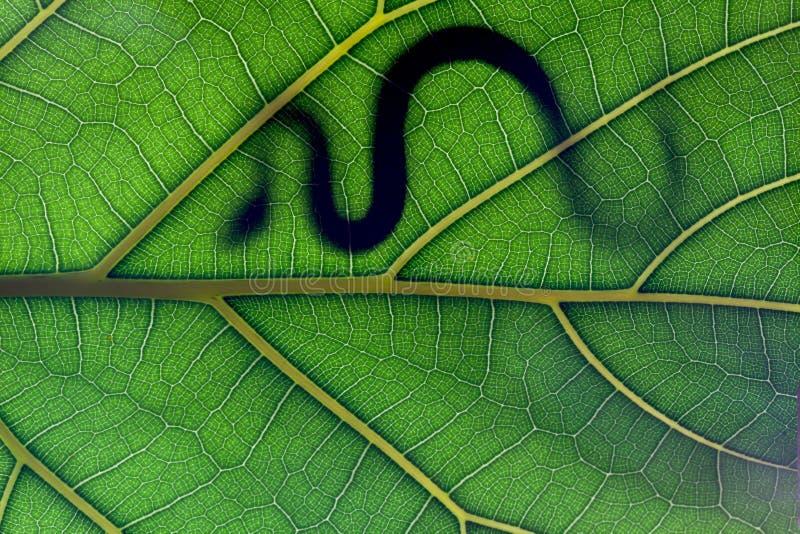 leaformstay arkivbilder