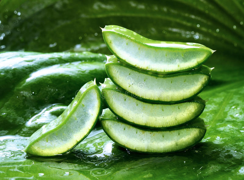 Leafs aloe vera with drop of water royalty free stock image