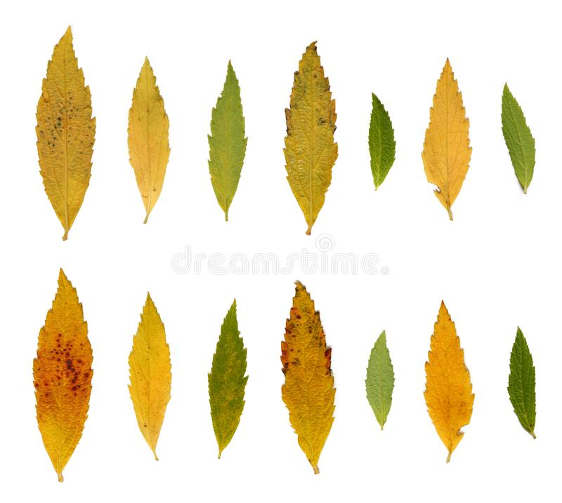 Download Leafs, autumn colors stock photo. Image of single, textured - 7023538
