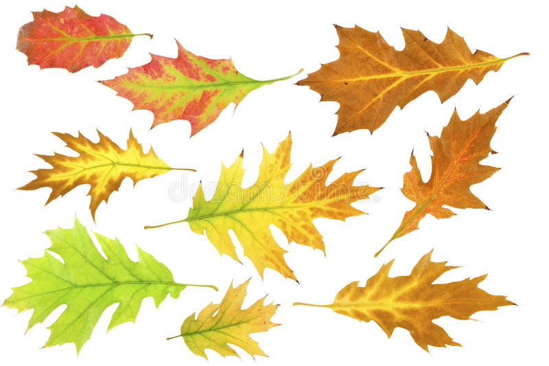 Download Leafs at autumn Set #1 stock photo. Image of green, purple - 16566328