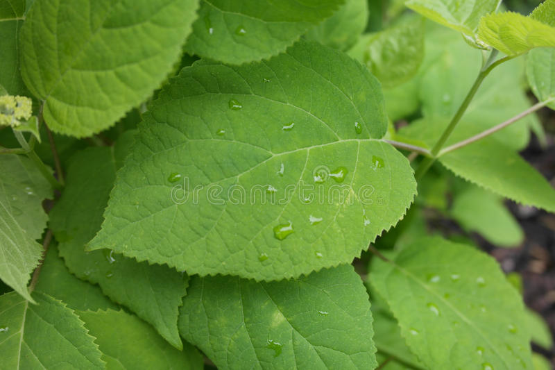 Download Leafs Detail Royalty Free Stock Image - Image: 31349926