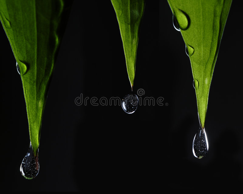 Leafs with drops stock photography