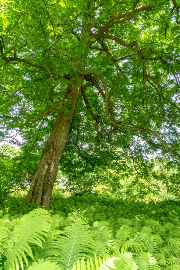 Leafs jaskrawy drzewo fotografia stock