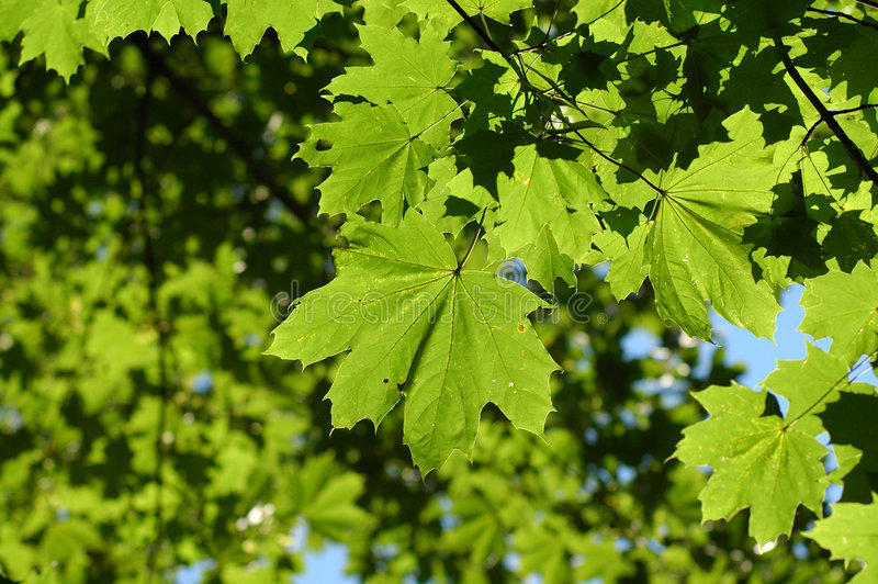 Download Leafs on tree stock photo. Image of green, glass, plant - 5488806