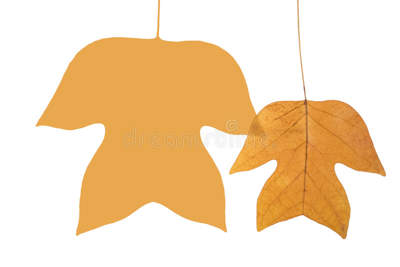 leafs två royaltyfri bild
