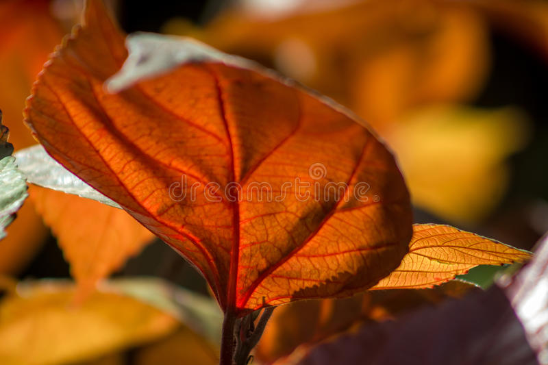 Leafs and vein stock image