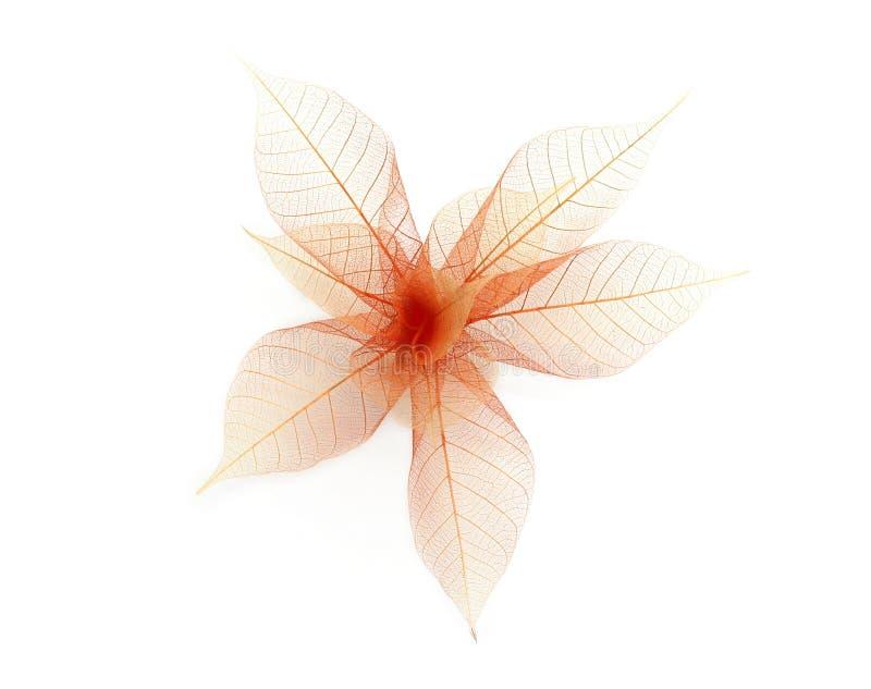 leafskelett royaltyfri foto