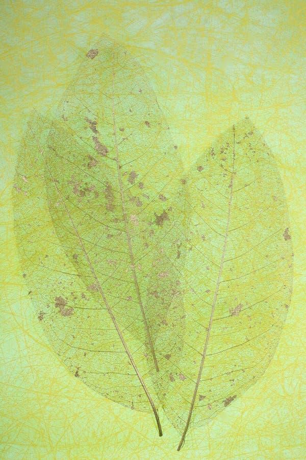 leafskeletttrio royaltyfri bild