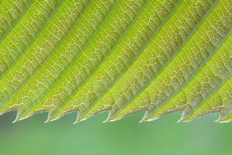 leaftextur royaltyfria foton