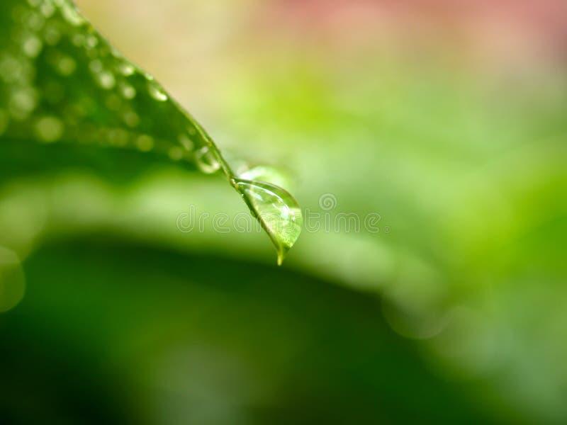 leafvatten för 10 droppe arkivfoto