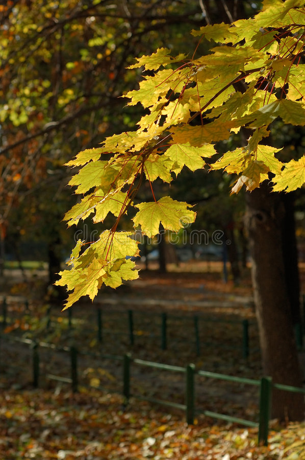 Download Leafy autumn trees stock photo. Image of serene, beauty - 3487128