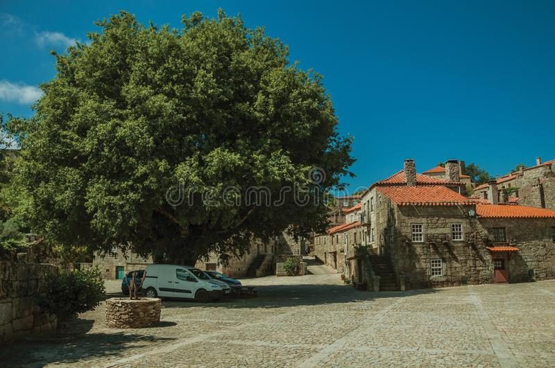 Leafy big tree on deserted square with gothic houses. Leafy big tree on deserted square with parked cars and gothic houses made of stone, in a sunny day at stock image