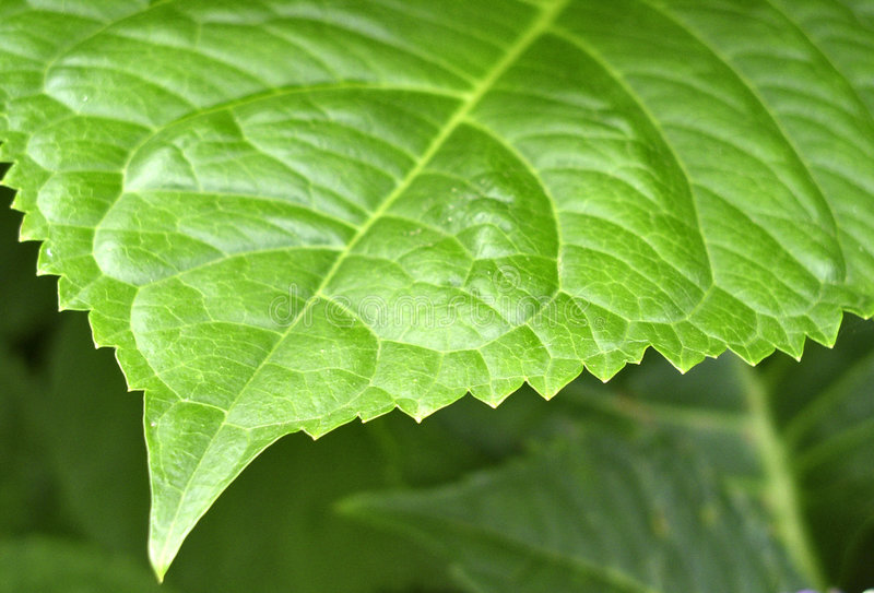 Download Leafy edge stock image. Image of background, plant, nature - 163511