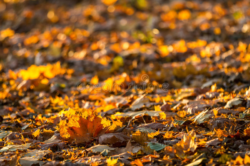 Leafy forest path royalty free stock photo