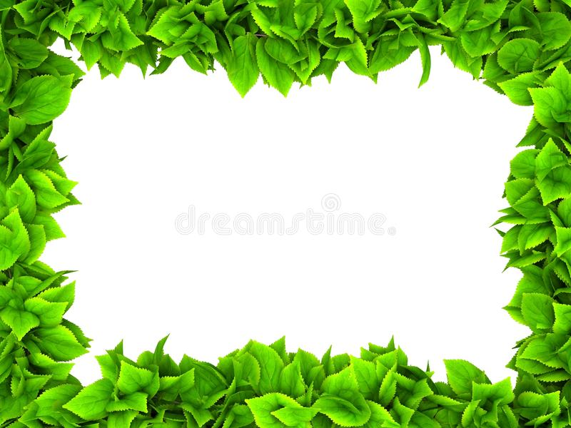 Leafy green border. Illustration of leafy green border isolated on white background with copy space