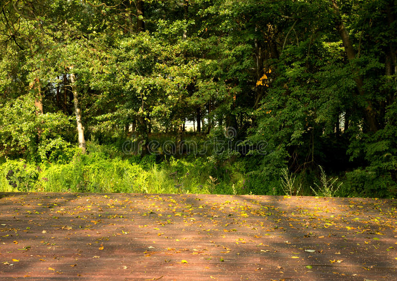 Leafy green forest landscape with wooden floor planks on foreground. Leafy forest with birch tree and numerous dense shrubs in the summer with the floor of stock images