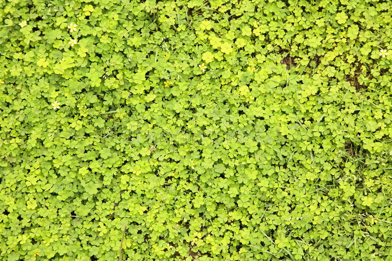 Leafy green plants background royalty free stock image