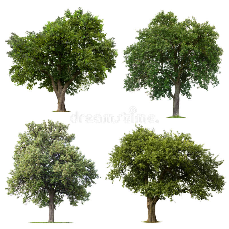 Leafy green trees royalty free stock images