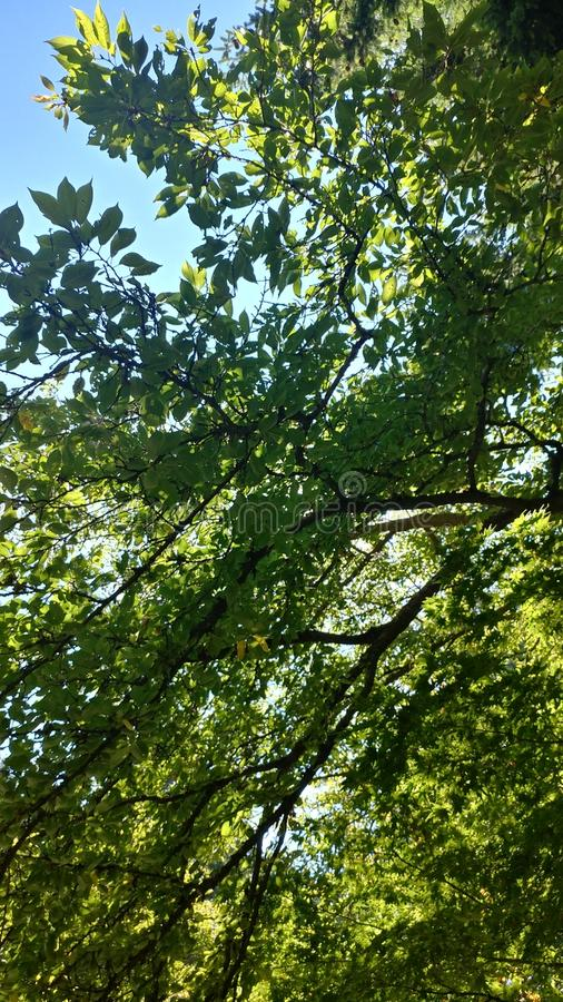 Leafy Greens stock image
