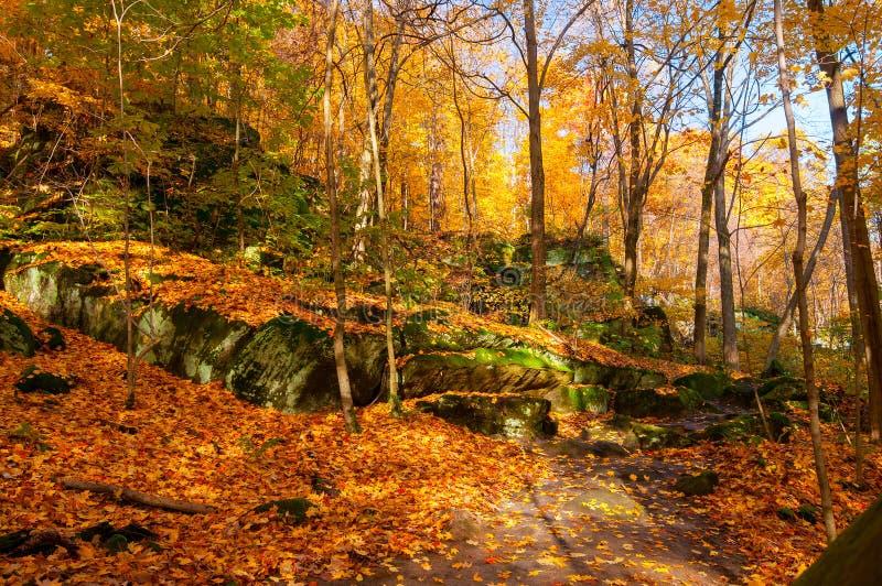 Download Leafy ledges stock image. Image of covered, leaves, park - 32166681