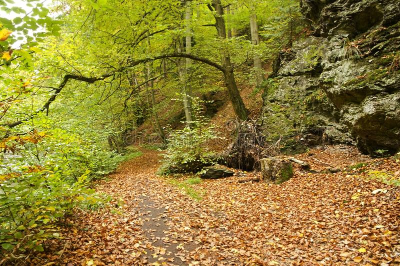 Leafy path through fall forest. Leaf covered path through forest in fall foliage on sunny day stock photography