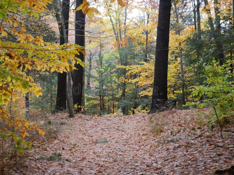 Leafy path in the fall through the forest. Leaf strewn path through the forest during autumn in New Hampshire stock images