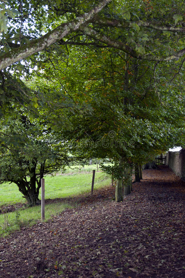 Leafy path by the rock of Cashel. In county Tipperary Ireland stock photography