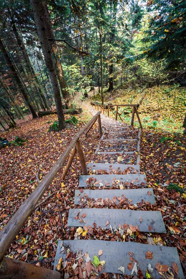 Leafy path from Sokolica peak in Pieniny mountains, Poland. Europe royalty free stock photography