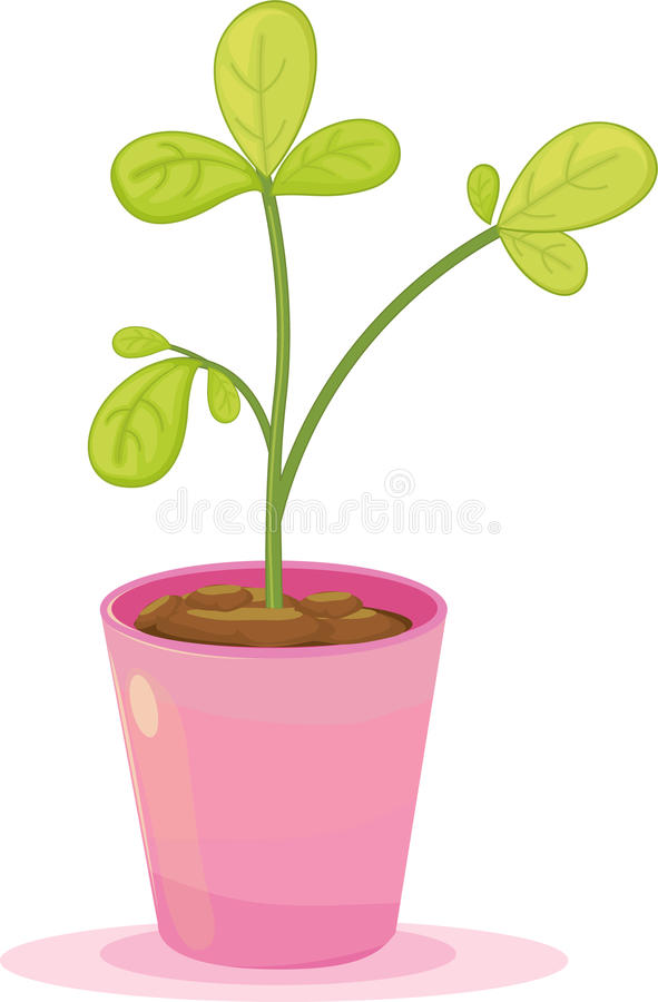 Download Leafy plant stock vector. Image of fresh, flower, isolated - 10395010