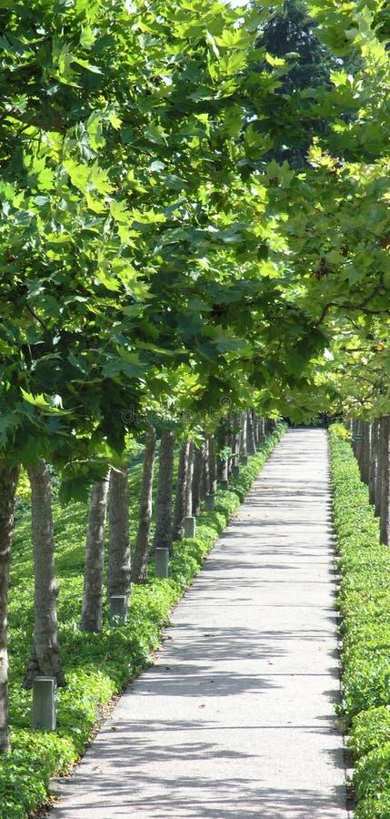 Leafy Sidewalk stock photography