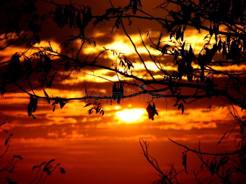 Download Leafy Sunset stock image. Image of elegant, burning, asia - 1960533