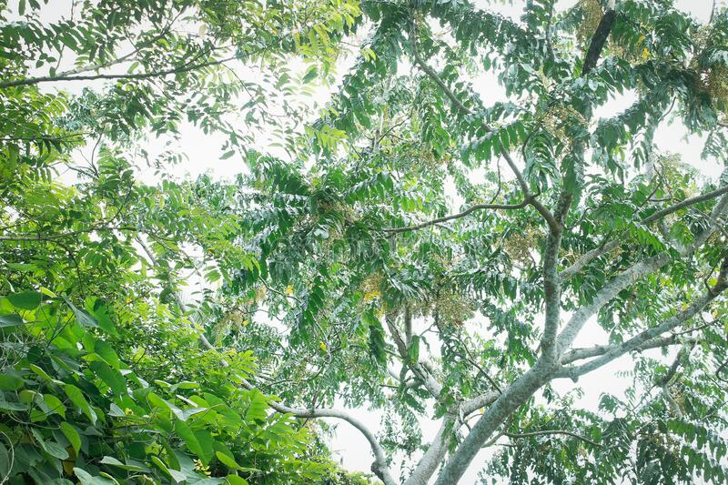 Leafy trees. A massive view of a leafy and green trees stock photos