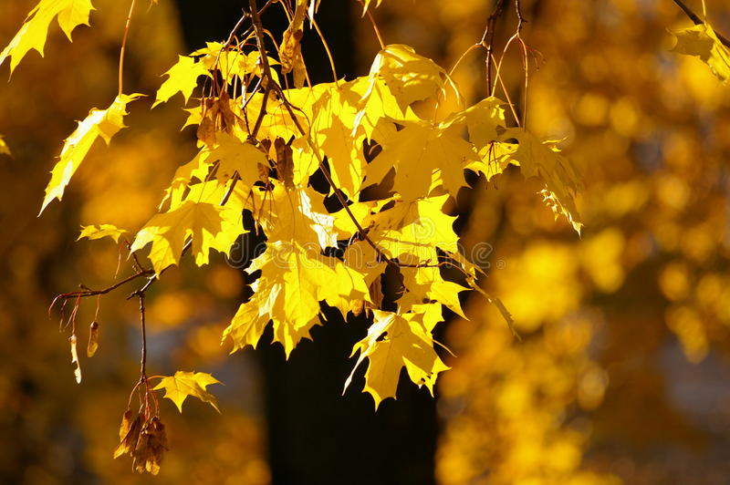 leafyellow royaltyfri bild