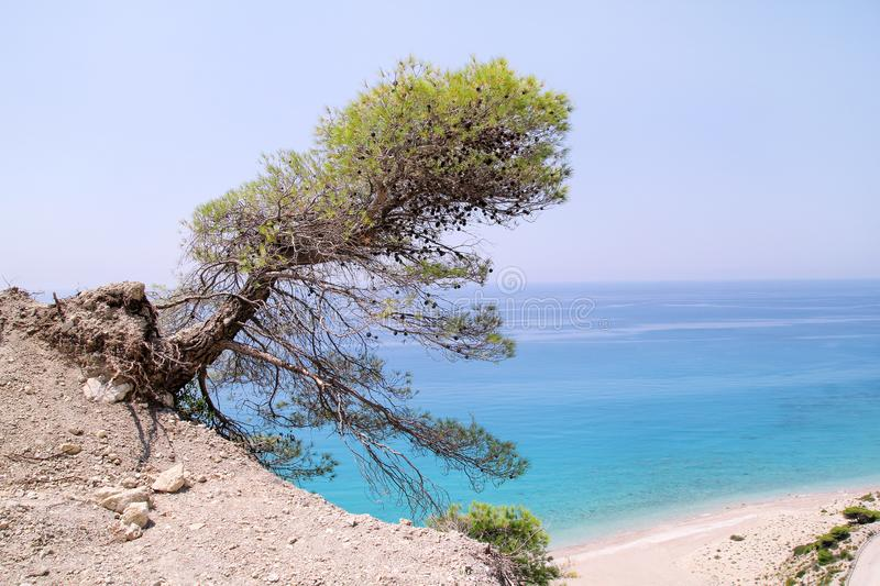 Leaning coastal and lonely pine tree at tropical sandy beach of Greece. Cedar tree on sea shore. Sea coast with beautiful horizon. royalty free stock photos