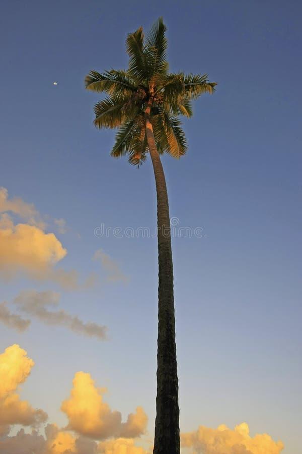 Download Leaning Palm Tree At Las Terrenas Beach At Sunset, Samana Penins Stock Photo - Image: 31247564