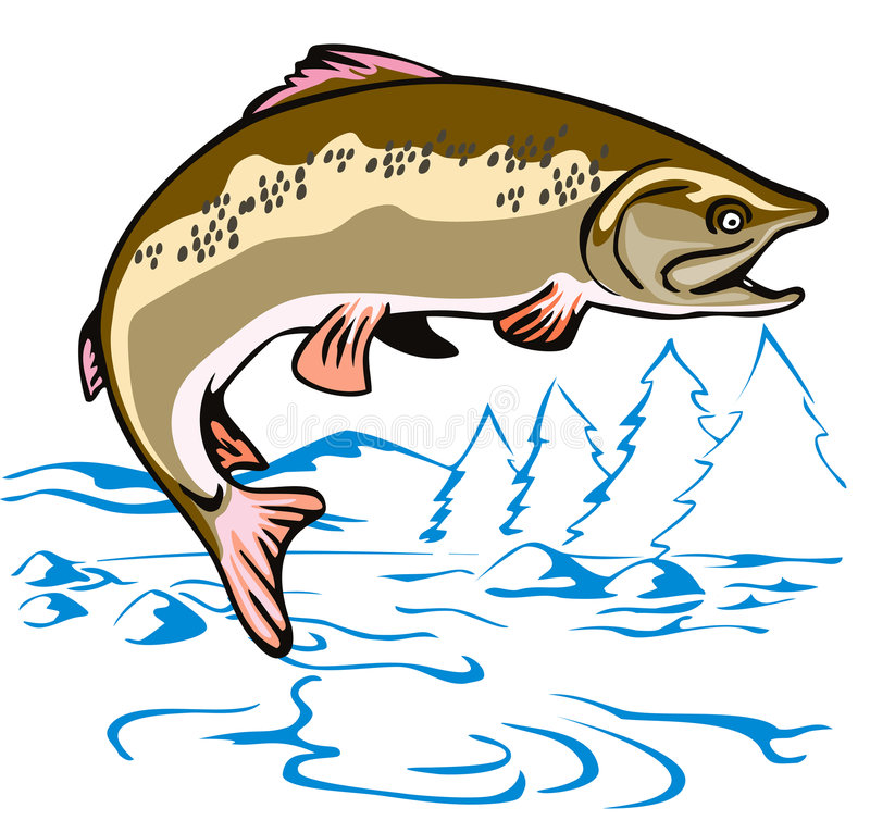 Leaping Brown Trout. Vector art of a Leaping Brown Trout vector illustration