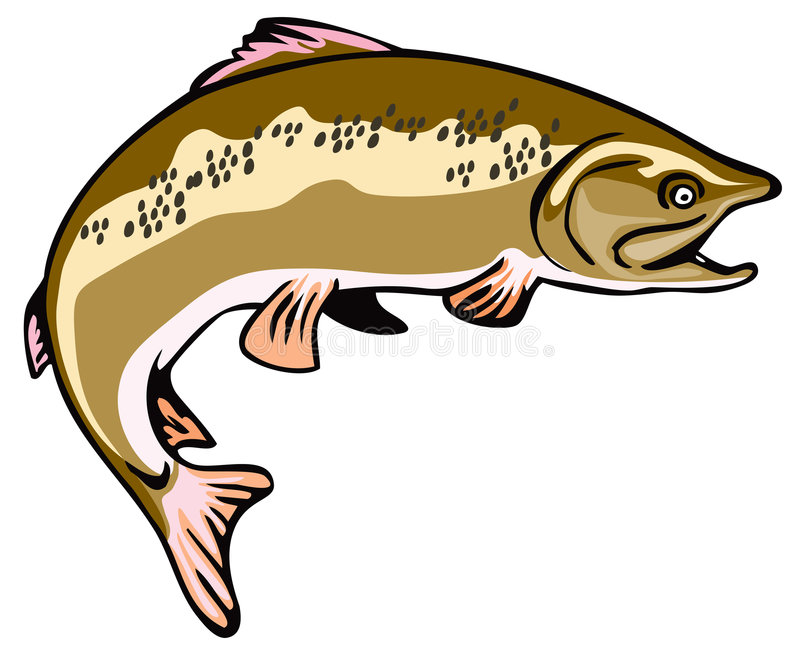 Leaping Brown Trout. Vector art of a Brown Trout with speckles stock illustration