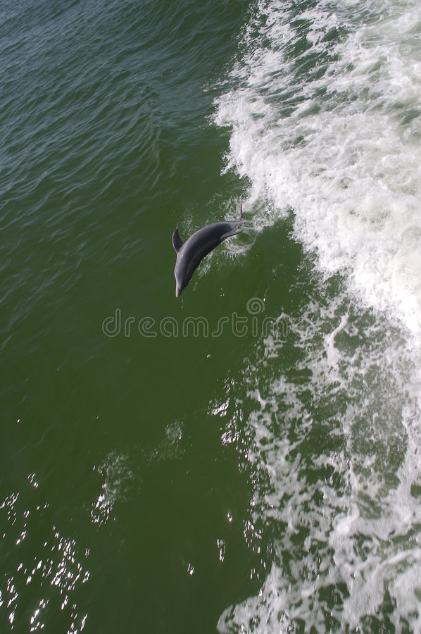 Download Leaping Dolphin stock image. Image of natural, relaxing - 1960739