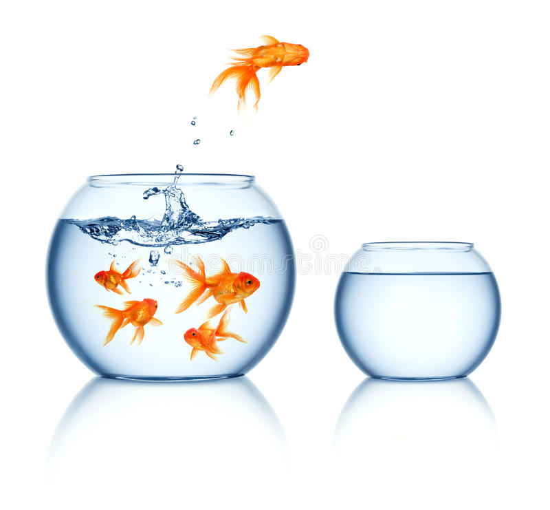 Leaping goldfish vector illustration