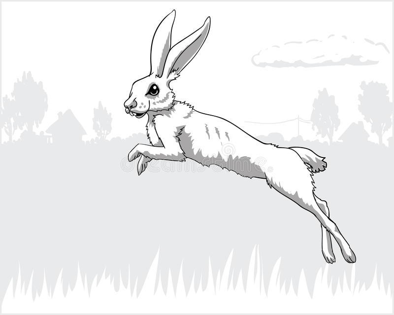 Leaping hare stock images