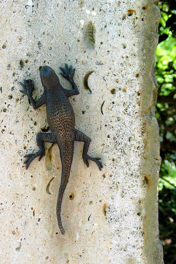 Download Leaping Lizards stock photo. Image of animal, arboretum - 13182