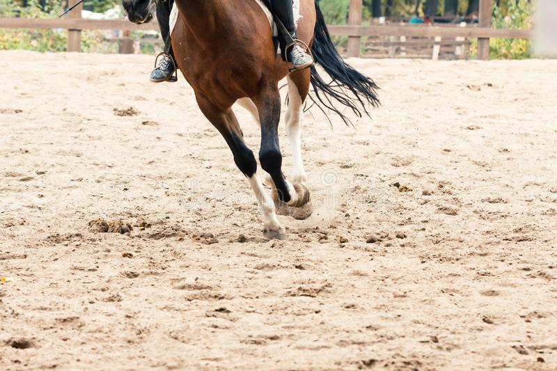 Learning Horseback Riding. Instructor teaches teen Equestrian. Sport stock photography