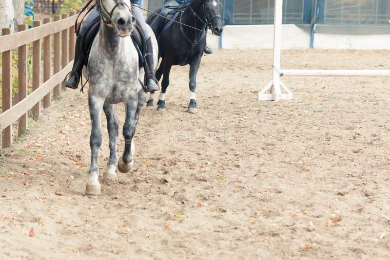 Learning Horseback Riding. Instructor teaches teen Equestrian. Sport stock photos