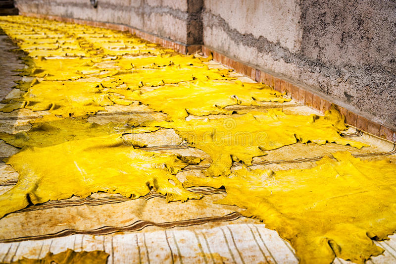 Leather drying in the sun in a tannery in Fez, Morocco. Yellow tinted leather drying in the sun in a tannery in Fez, Morocco stock image