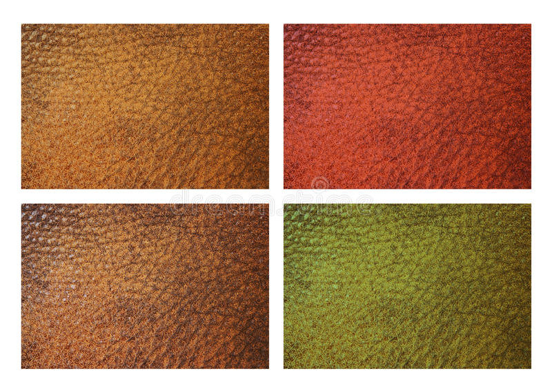 Leather in four colors. Leather grain swatches in red, brown, green, yellow isolated on white royalty free stock photo