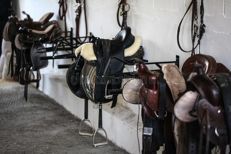 Leather horse saddles and equipment resting on hangers in tack r. Oom stock photos